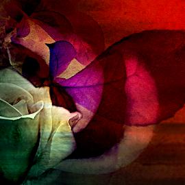 SUNSET by Carmen Velcic - Digital Art Abstract ( abstract, rose, red, gold, flowers, digital, sun )
