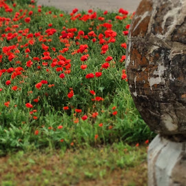 Beauty and the Beast by Samantha Dubreuiel - Instagram & Mobile iPhone ( red, red flower, outdoor, greenery, stone, poppies, landscape )