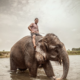 Nature and Man II by Sarah Delia - People Street & Candids ( elephants, native, jungle, nature and man, chitwan, travel, river, nepal )