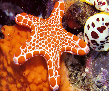 Starfish Live Wallpaper - screenshot