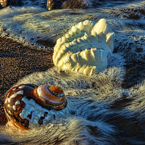 Holiday by Berrin Aydın - Nature Up Close Other Natural Objects ( summer, sea, turkey, bodrum, morning,  )