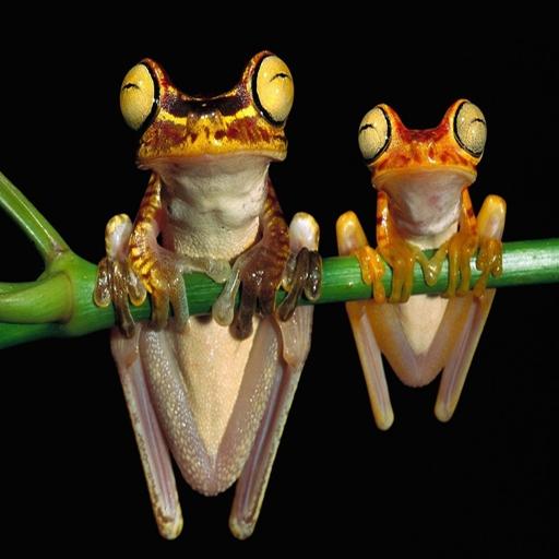 三維青蛙 LOGO-APP點子