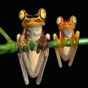 3D Frog icon