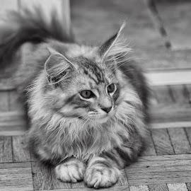 by Ani Desu - Animals - Cats Kittens