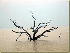 Volta lake
