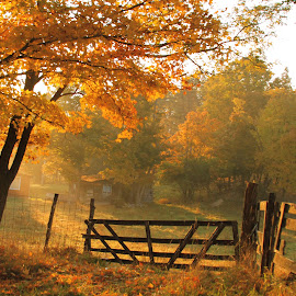 Beauty Of Autumn by Aaron Shaver - Landscapes Prairies, Meadows & Fields ( warm, mood, morning, landscape, foilage, country, farm, fence, tree, nature, color, fog, autumn, light, mist )
