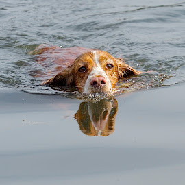by James Blyth Currie - Animals - Dogs Portraits