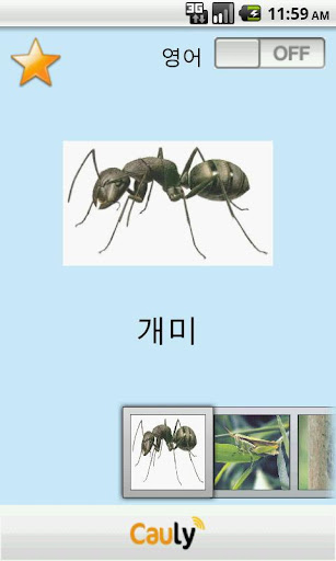Baby English and Insect