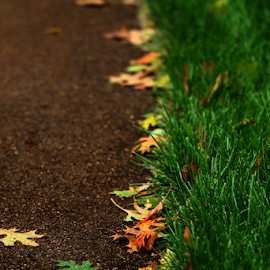 by Dipali S - Nature Up Close Leaves & Grasses ( autumn, grass, fallen, oak, foliage, fall, path, road, leaves )