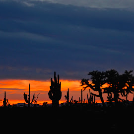 Sunset Silhouette  by Robert Remacle - Landscapes Deserts (  )