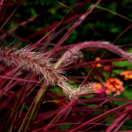 by Colette Hale - Nature Up Close Leaves & Grasses
