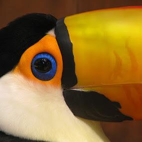 Toucan by Name of Rose - Animals Other ( bird, beak, toucan, eye )