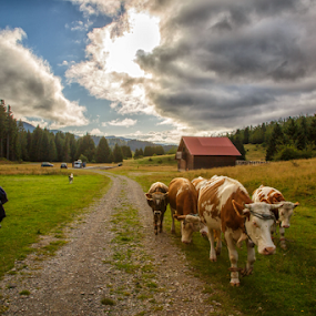 Sumer time by Stanislav Horacek - Landscapes Prairies, Meadows & Fields