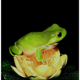 by Edah DJ-phonks - Animals Amphibians