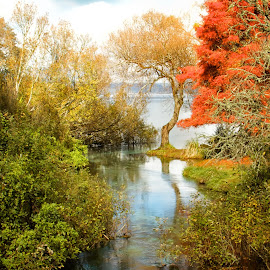 Springs at Lake Rotorua by Dick Eigenraam - Landscapes Waterscapes