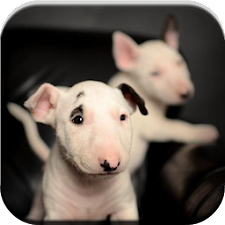 Bull Terrier Puzzle Game