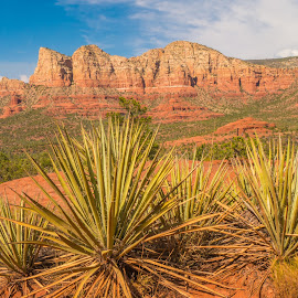 Red Rocks and Yuccas by Karen Martin - Landscapes Deserts ( clouds, az, mountain, desert, rock, forest, red, sky, agave, blue, yucca, arizona, sedona )