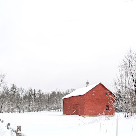 Red of Winter by Katie Munson - Buildings & Architecture Other Exteriors ( fence, red, winter, cold, barn, snow )