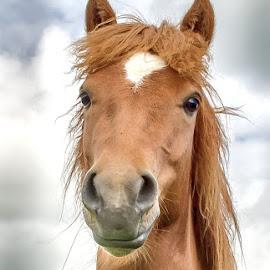 by Oddsteinn Björnsson - Animals Horses