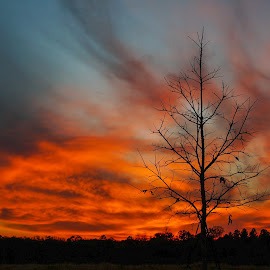 Last Leaves by Phillip Gandy - Landscapes Sunsets & Sunrises ( red, sky, tree, silhouette, sunset )