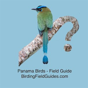 Panama Birds Field Guide