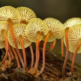 Can Can Dancers by Mike Moats - Nature Up Close Mushrooms & Fungi