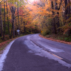 Drive in fall by Steven Faucette - Landscapes Mountains & Hills ( mountains, nc, fall, sc )