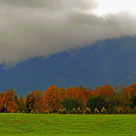 A fence of autumn leafed trees. by Dan Dusek - Landscapes Forests ( pasture, autumn, nature photography, autumn colors, landscape,  )