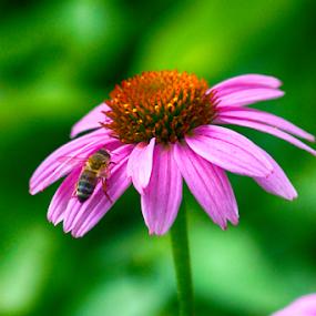 by Cynthia Babcock - Flowers Flower Gardens
