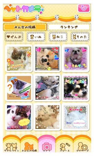 Petcamera 讓您家寵物的照片更加可愛生動