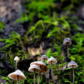 Tiny mushrooms by Ana Hm - Nature Up Close Mushrooms & Fungi ( nature, green, moss, romania, fairytale, mushrooms )