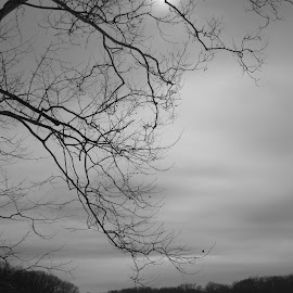 Against a Winter Sky by Marcia Taylor - Novices Only Landscapes (  )