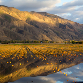 Flooded farming fields in San Jacinto, CA by Kara Propps - Landscapes Prairies, Meadows & Fields ( field, mountain, flood, california, farming,  )