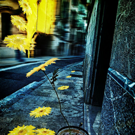 Masterofthemoment ART by Peter Wabbel - Abstract Light Painting ( masterofthemoment, sunflowers, yellow, palma de mallorca, street photography, hope )