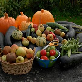 Fall Harvest by Sean Laffey - Food & Drink Fruits & Vegetables ( fresh veg, fall harvest, pumpkins, vegetables, harvest, picked apples )