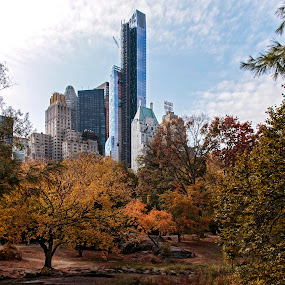 Central Park, NYC by Patti Reddoch - City,  Street & Park  City Parks