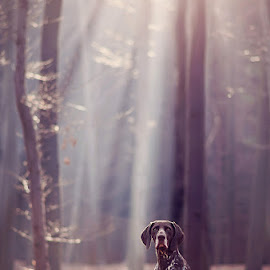 Forest touch... by Hanna Králíková - Animals - Dogs Portraits
