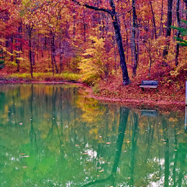 Fall in Indiana  by Brock Willis - Landscapes Waterscapes ( water, amazing, love, indiana, reflection, bench, fall colors, awesome, fall, beautiful )
