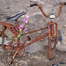 Nothing is for ever. by Marcel Cintalan - Transportation Bicycles ( bicycles, bike, transportation, rusty, abandoned,  )