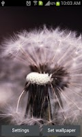 Screenshot of Galaxy S3 Mini Dandelion LWP