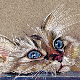 Cat drawing  by Daliana Pacuraru - Drawing All Drawing ( cat face, daliana pacuraru, cat eyes, cat portrait, cat drawing )