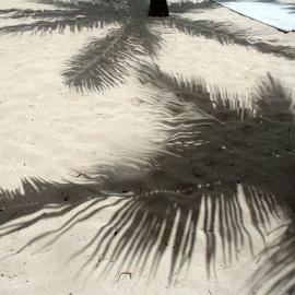 Palm Shadows by Liz Stonich - Nature Up Close Sand