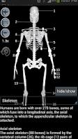 Screenshot of Human bones lite