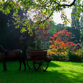 A sunday morning in Enkhuizen,The Netherlands by Marcel Eringaard - City,  Street & Park  City Parks ( enkhuizen, park, 2014, fall, herfst )