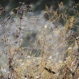 web by Boris Romac - Nature Up Close Webs ( sony, croatia, coguar, web, net, dsc, hx400v )