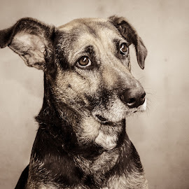 Brigitte by Andréia Gomes - Animals - Dogs Portraits ( animals, dogs, dog, animal, #GARYFONGPETS, #SHOWUSYOURPETS )