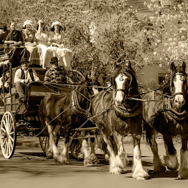 horse drawn carriage, by Vibeke Friis - Transportation Other ( passengers, old, costumes, horses, carriage )