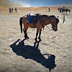 Kuda poni..... by Hangga Pribadi - Instagram & Mobile Android
