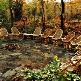 Social Circle by Tamsin Carlisle - Artistic Objects Furniture ( rattan, chair, jungle, outdoor, trees, forest, india, circle, courtyard,  )