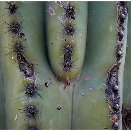 Cactus by Jebark Fineartphotography - Nature Up Close Other plants ( desert, nature, still life, arizona, plants, intimate landscape, usa, cactus )